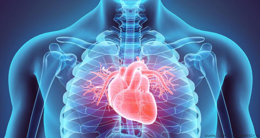 Brustkorp mit Herz